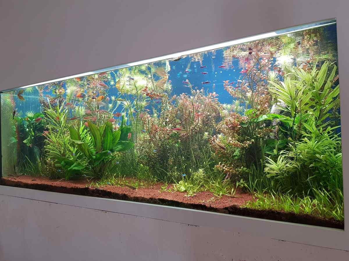 מים מתוקים צמחיה טבעית עיצוב אקווריום Wow Design